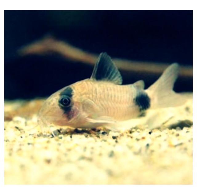 ◆『金魚の混泳』ヒーターで保温すれば一緒に飼える熱帯魚。大きさと相性を合わせよう。