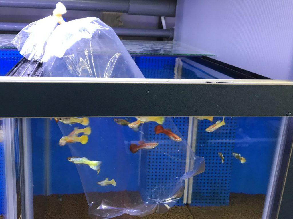 ◆新しい生体を入れるときは「こんな水だよ」と教えてあげる。熱帯魚・金魚・メダカも共通『水合わせ』方法。