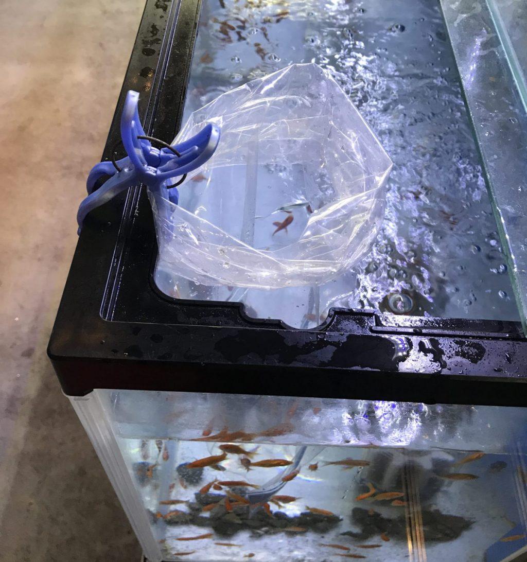 ◆水合わせの注意と方法。袋の水は入れる?入れない?