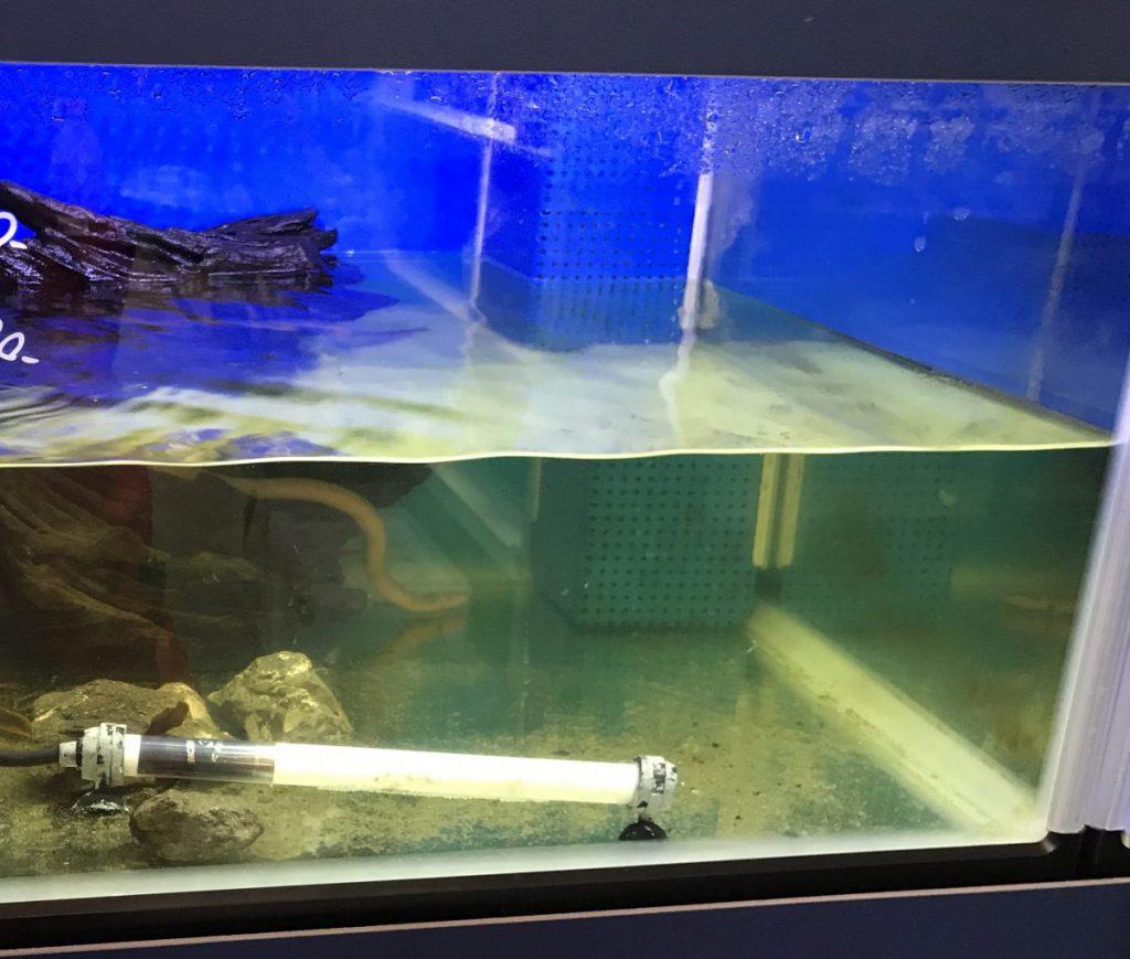 『熱帯魚・金魚・メダカの病気お悩み相談』するにはには、スマホ画像や写真を持っていくと良い。アドバイス・治療を教えてもらうために。