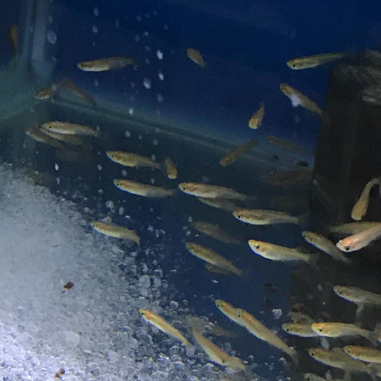 ◆30リットル水槽でメダカ飼育を始めたら、白濁りして困っている・・・
