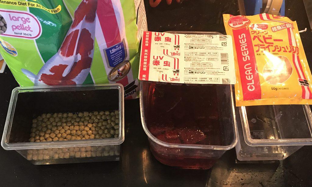 お店での餌やりはこうやってます。エサの量は水槽ごとに違うもの。