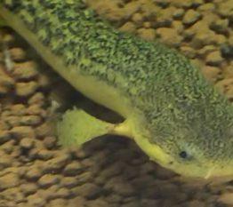 ◆【治療・病気】ポップアイが出てしまったので・・・治しました。ベタをはじめ熱帯魚やメダカや金魚もかかる嫌な症状。