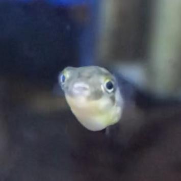 ◆人も魚も毒には気をつけよう。