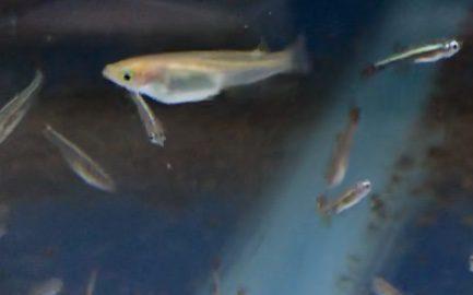 ◆メダカと一緒に飼える熱帯魚とは?22種類との相性ご紹介!!