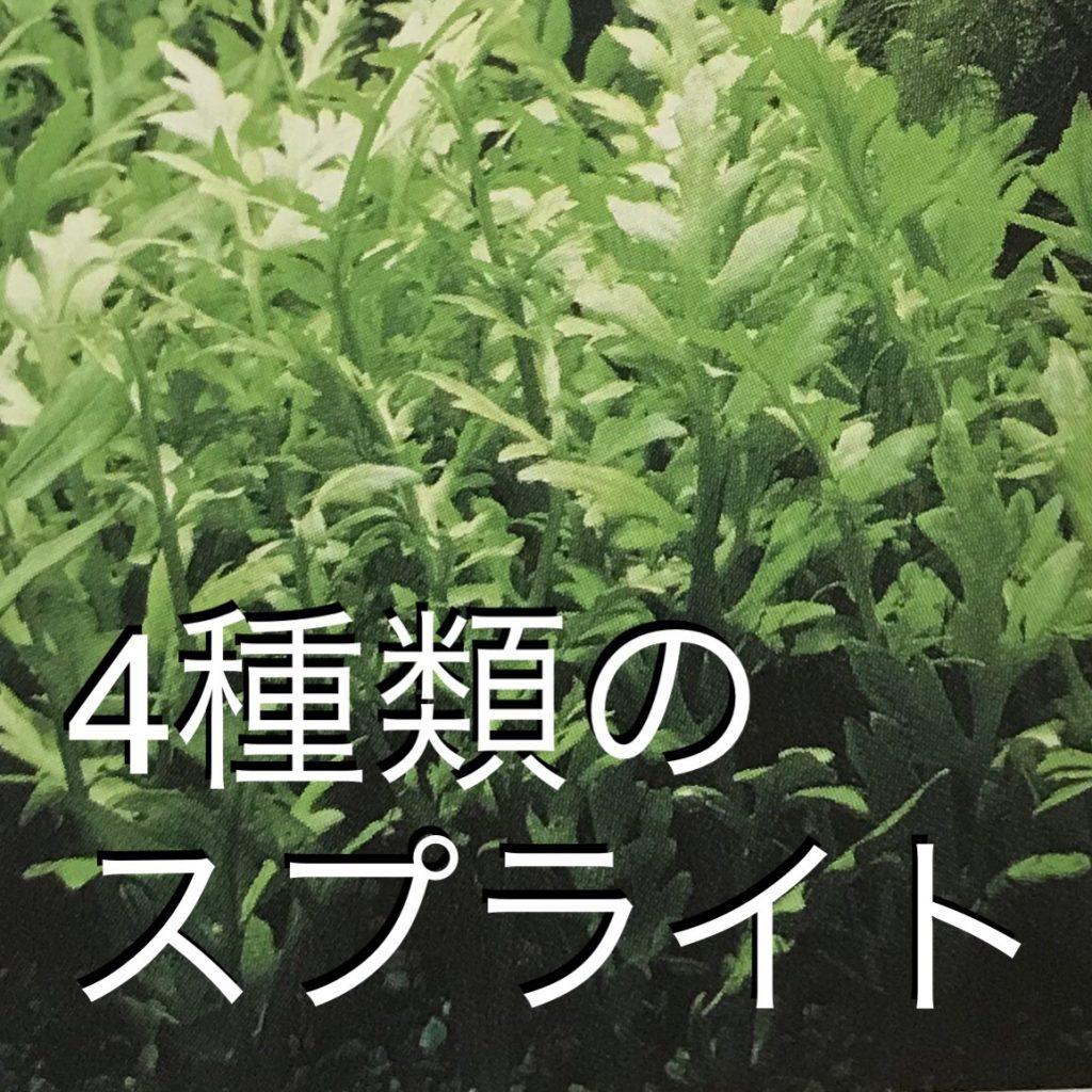 ◆丈夫な水草○○スプライト4種類。ウォーター、アメリカ、ベトナム、ラオス。