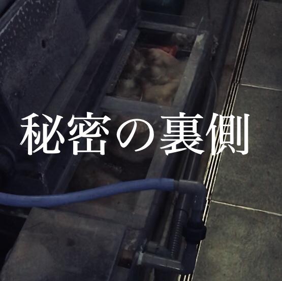 ◇『sakanaの日常』秘密のバックヤード