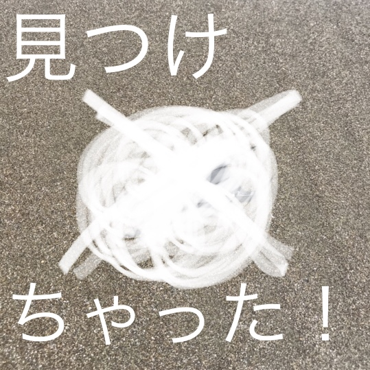 ◇『sakanaの日常』先日、海で拾いました。