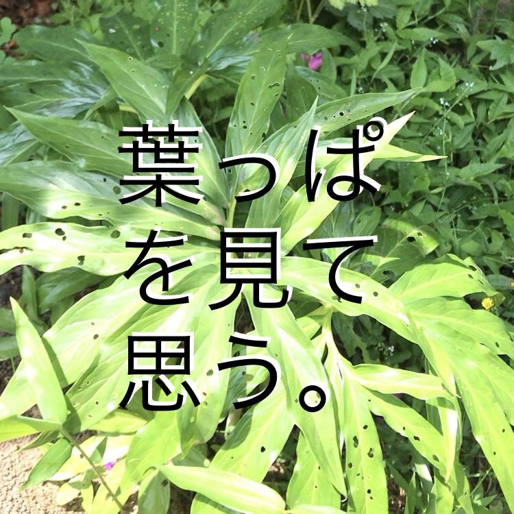 ◇『sakanaの日常』この葉を見たら・・・
