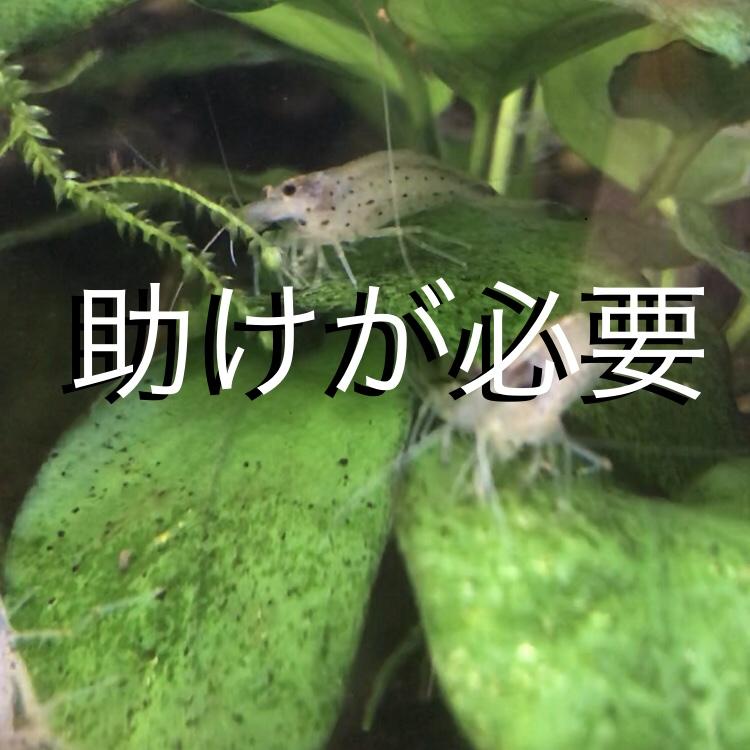 ◇『sakanaの日常』うちのサポートメンバー。