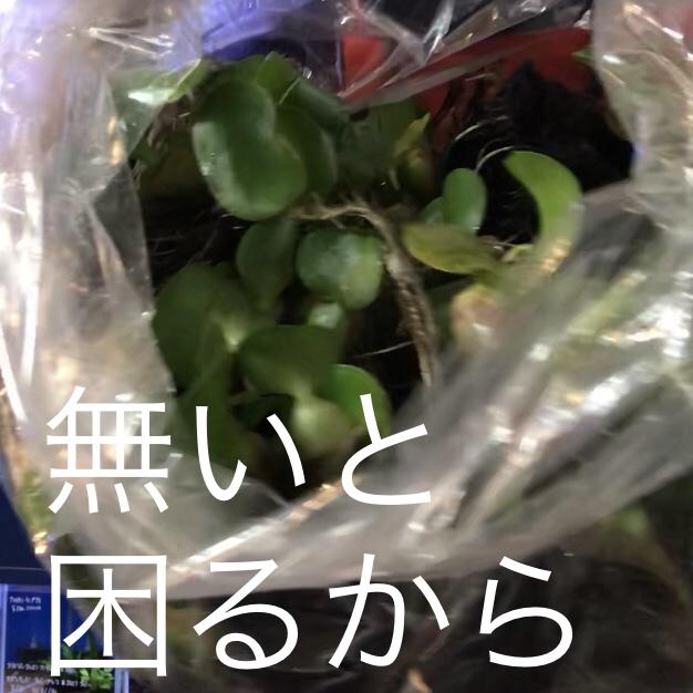 ◇『sakanaの日常』どんどん緑がやってきます。