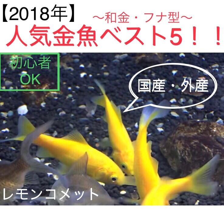 ◆『2018年』人気の金魚ランキング【和金・フナ型】ベスト5!!