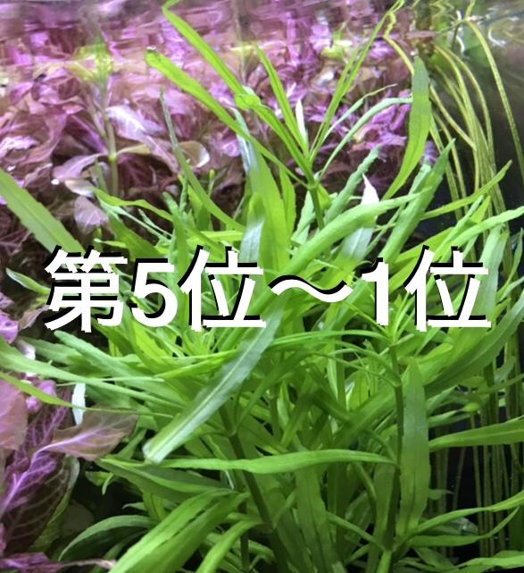 ◆2018年人気の鉛巻き水草TOP5位~ あえて鉛巻きで育成させるには。
