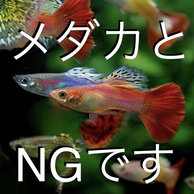 ◆メダカと熱帯魚の危険な組み合わせ!!抑えておきたい混泳セオリーとは。