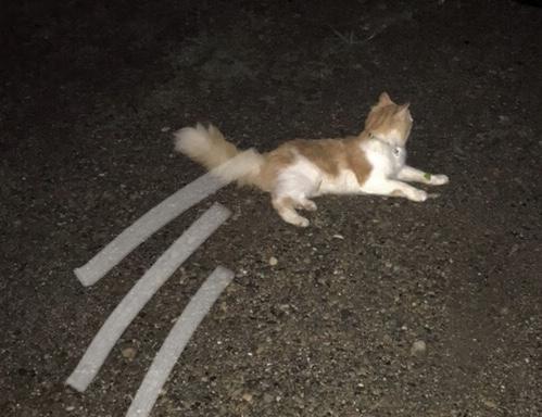◇『sakanaの日常』登るネコ