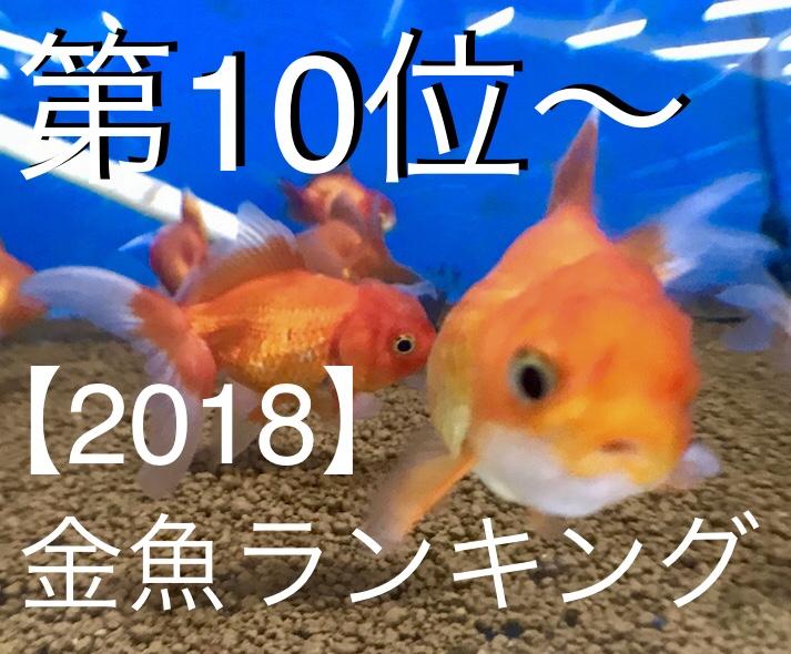 ◆【2018】人気金魚ランキング『丸型編』10位~おまけ