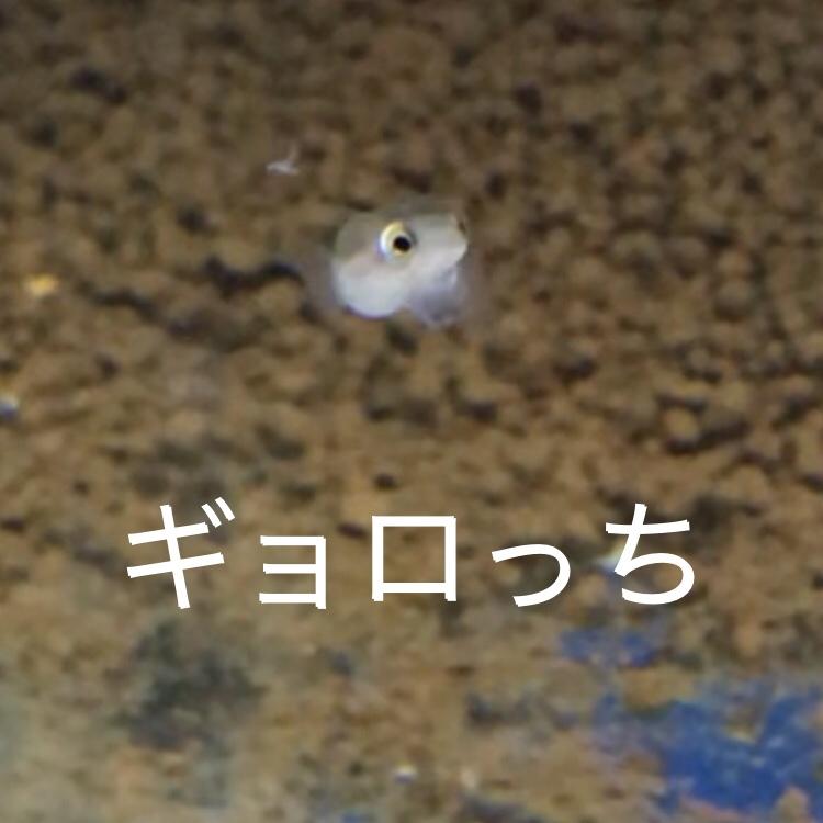 ◇『sakanaの日常』コウタイベビー