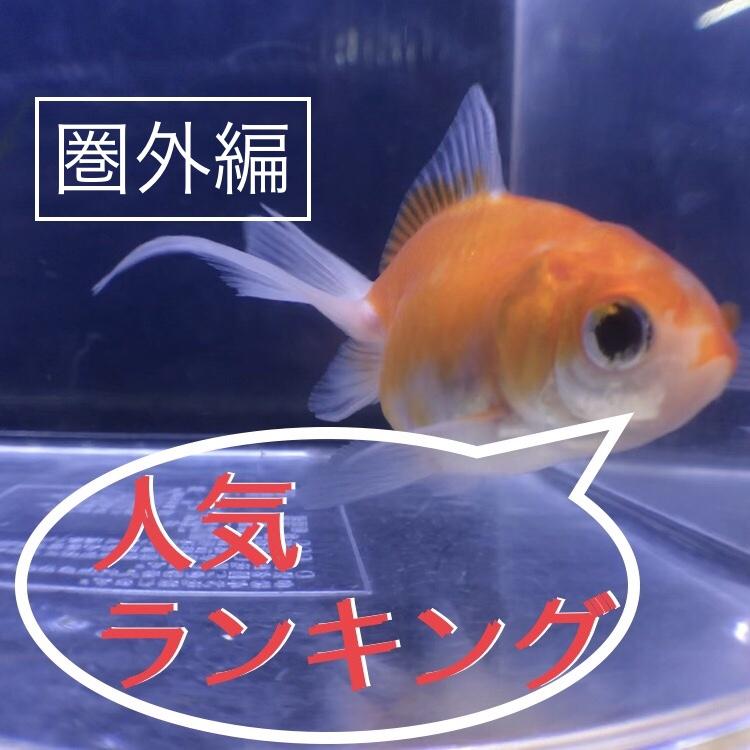 ◆【2018】人気金魚ランキング『丸型編』・・・の圏外5種を紹介します。
