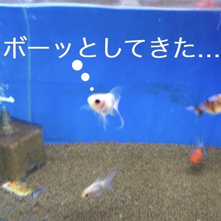 ◇『sakanaの日常』シャッキっとしないなら。