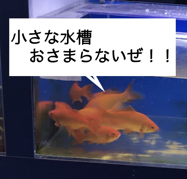 ◇『sakanaの日常』これでワンコイン?!