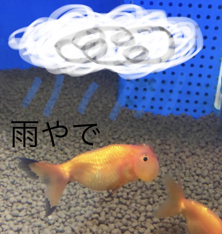 ◆『雨水って水槽に使わない方が良い』ってホント??