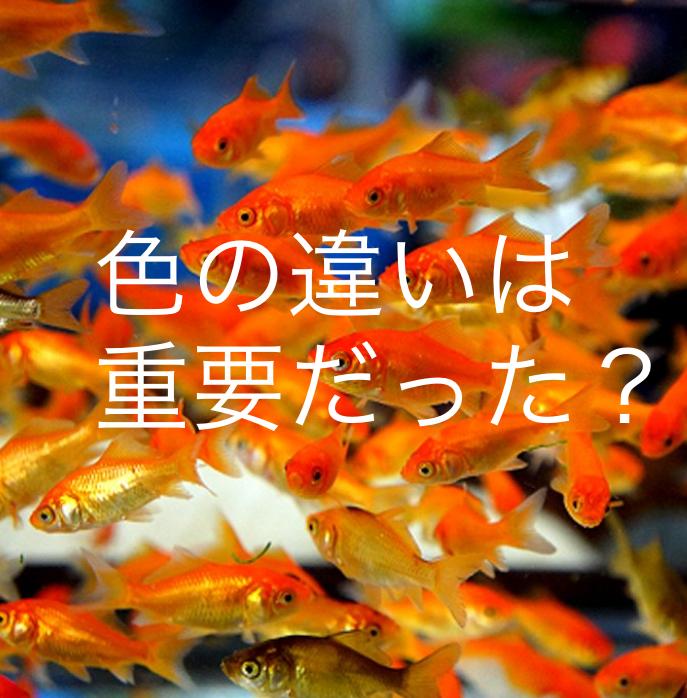 ◆『今はダメなの??』新仔の時期に金魚を飼いたくなったら・・・