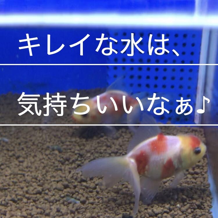 ◆金魚にお勧めの『フィルター』とは。初期セットでは力不足なの??