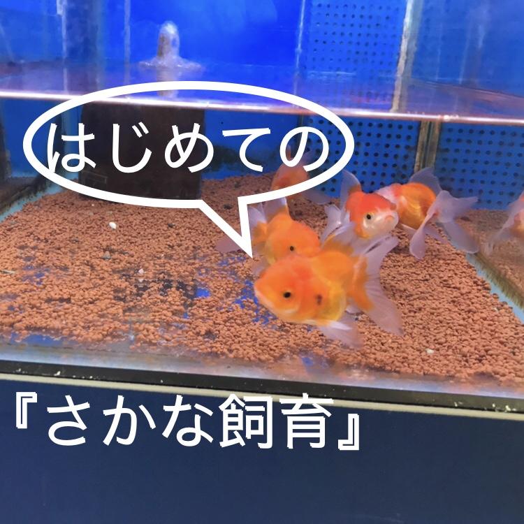 ◆小さなお子様のために水槽を準備するならば。『はじめてのお魚飼育』