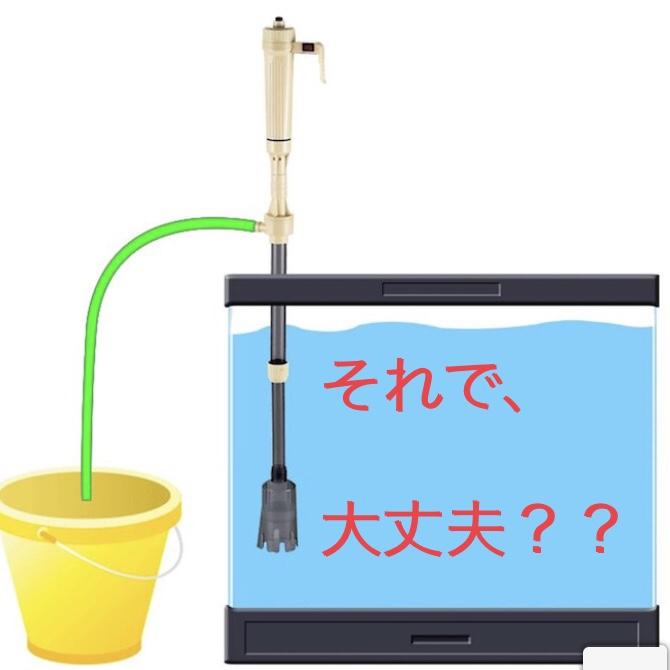 ◆水換えをした後に、お魚が死んでしまうのはなぜ?身近な落とし穴に気をつける。