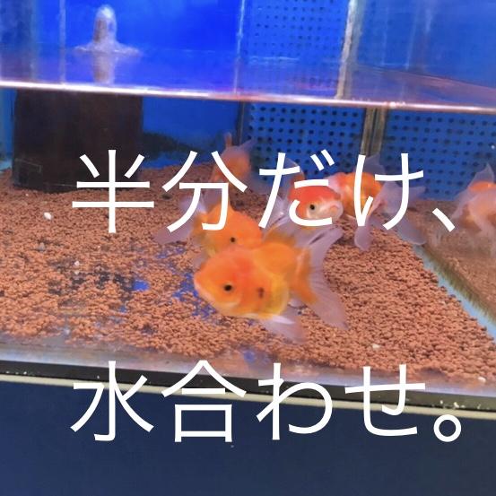 ◇『sakanaの日常』水合わせに、愚痴??