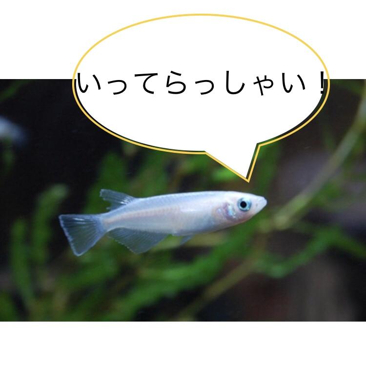 ◆メダカを飼育してますが、2週間外出しなければならない?出張中の水槽管理とは