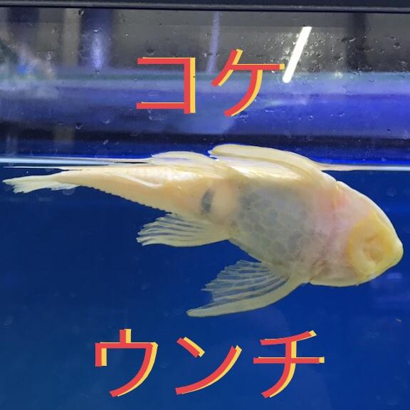 ◇『sakanaの日常』ウンチ出せ!!