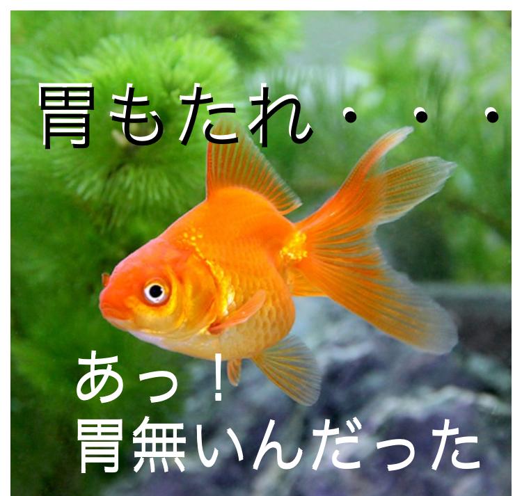 ◆魚がエサを食べない問題。飼育環境?病気?痩せている原因を探ろう。