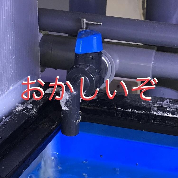 ◇『sakanaの日常』おかしいぞ・・・ポンプが詰まったら一瞬で治す方法。