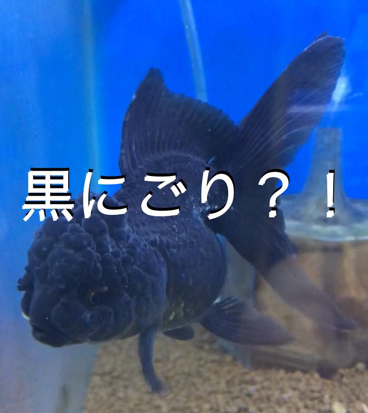 ◆水が『黒く濁る』3つの理由と解決方法とは。アクアリウムで起こる水槽アクシデント。