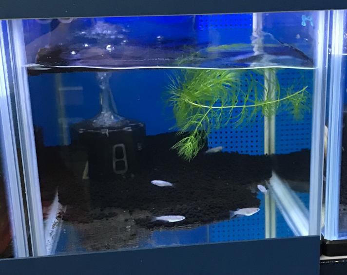 ◆メダカに使ってはいけない底砂とは?サンゴは当たり前!この他気になる微妙なアイテム・・・