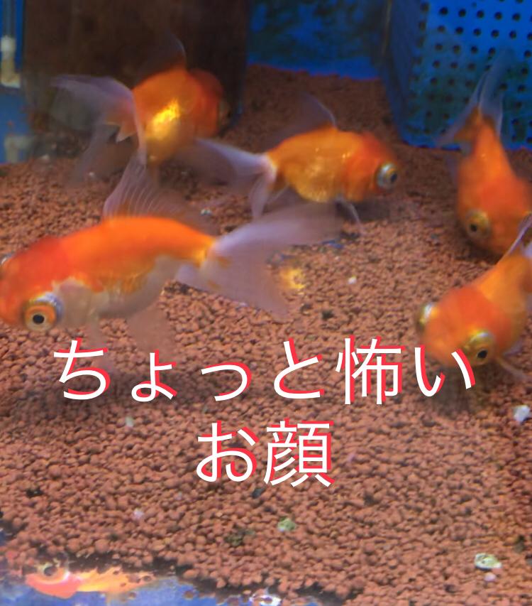 ◇『sakanaの日常』ちょっと顔怖い・・・
