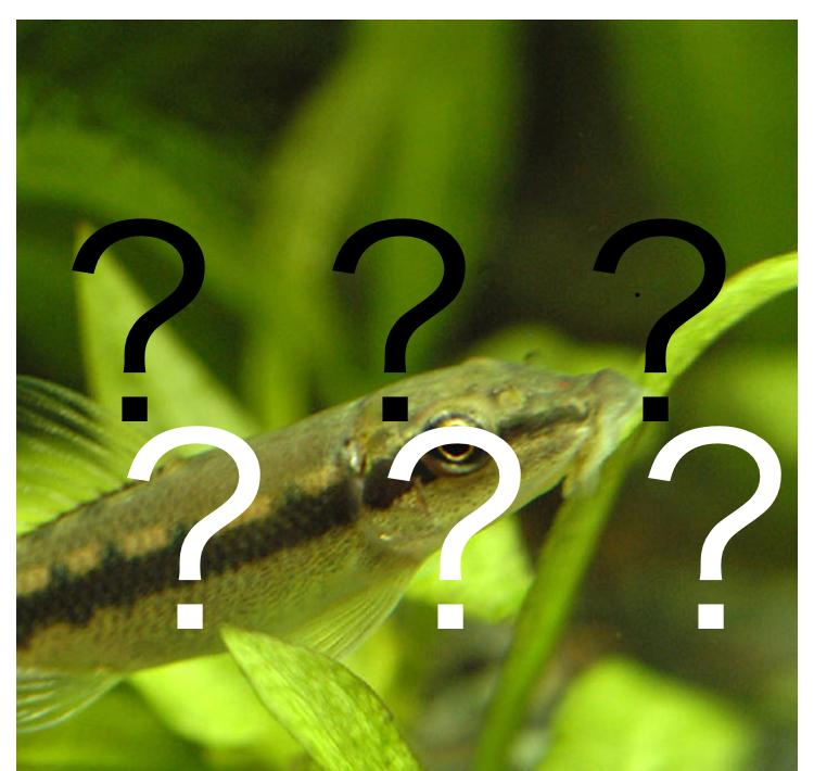 ◆『茶ゴケ』と『金魚』と『コケ取り生体』。ヤマトヌマエビやタニシに変わるお勧め生体の存在??