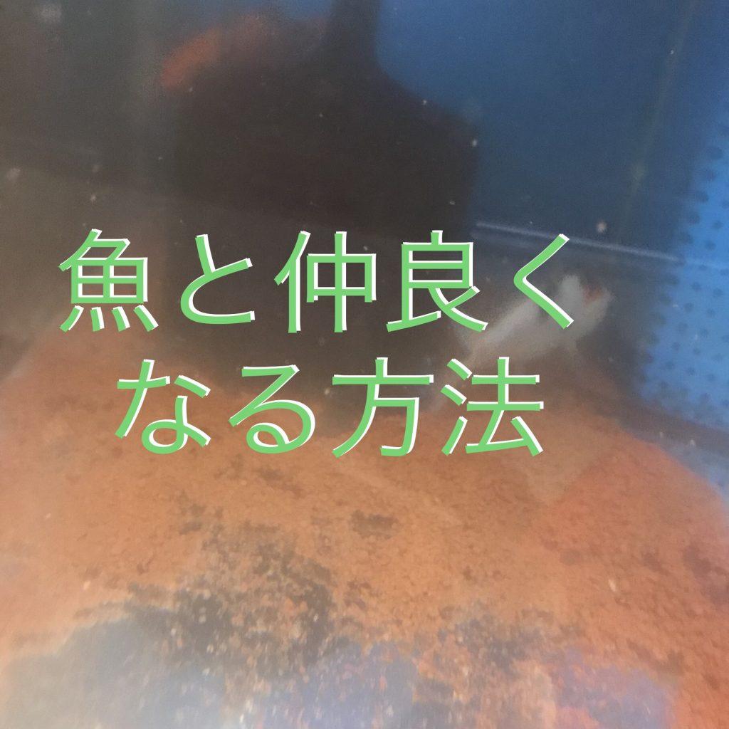 ◇『sakanaの日常』魚は移す派?そのまま派?水槽掃除の方法は自由です。