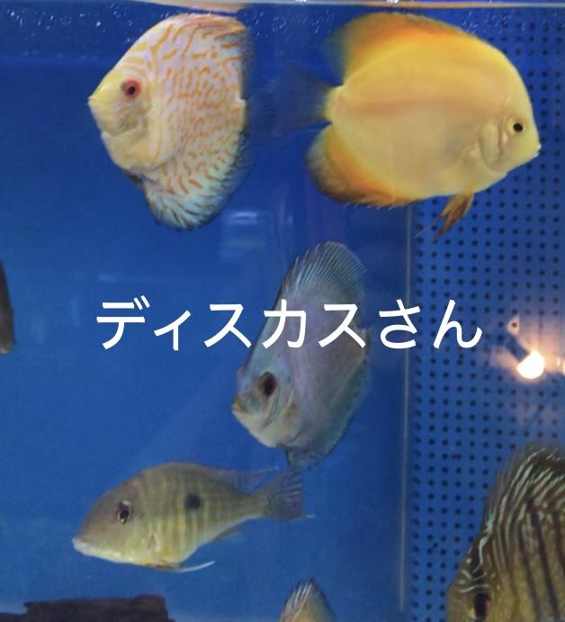 ◇『sakanaの日常』ディスカス入れてみた