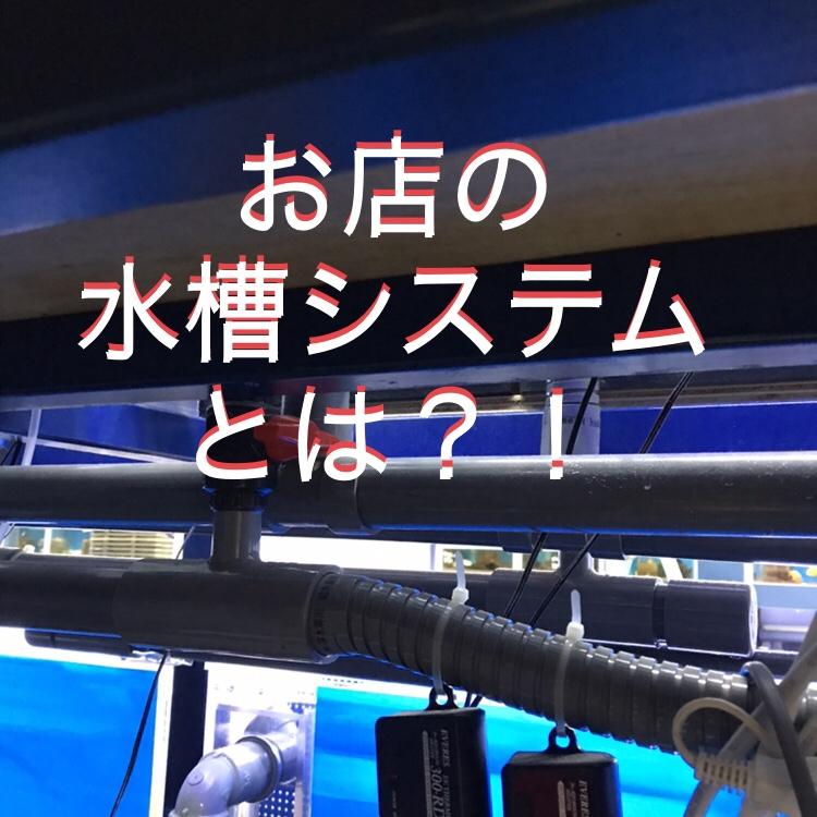 ◆販売水槽の秘密とは??だから『お魚』たくさん入っています。オーバーフロー水槽のチカラ。