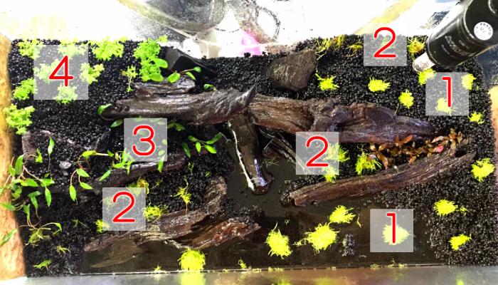 ◆水草レイアウトPart2、育てたい水草を入れましょう。サクッとレイアウトを始める。