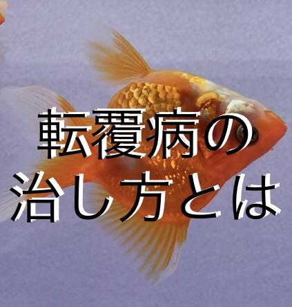 ■金魚の転覆病を治すために、揃えたい必要なアイテム紹介