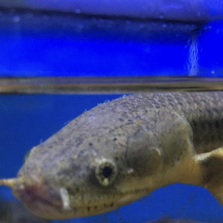 ◆季節の変わり目には気をつけたい!魚の病気まとめ記事7選!!
