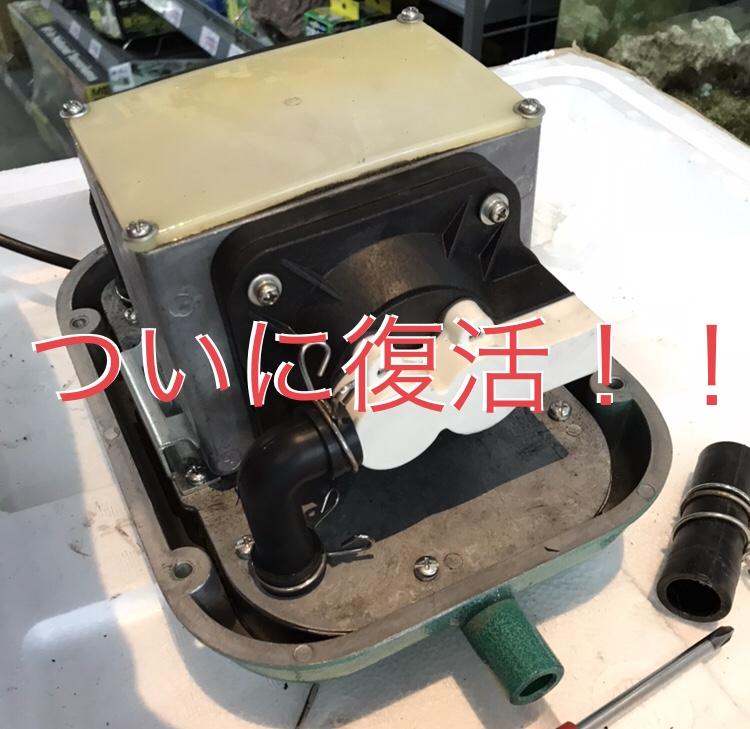 ◇『sakanaの日常』ついに復活!!ブロアー修理完了です。