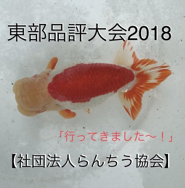 ◆東部品評大会2018開催(一般社団法人らんちう協会)へ行ってきました。