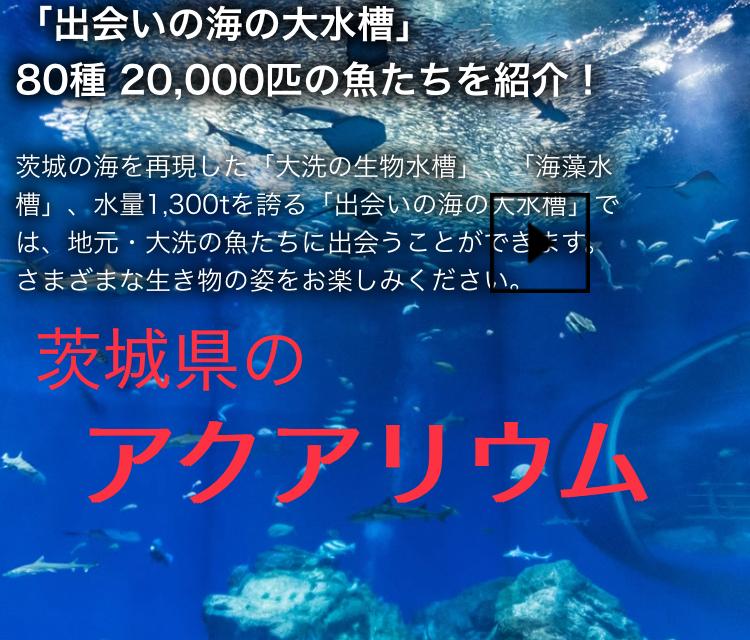 ◆茨城県のアクアリウム施設3箇所紹介。水族館に自然観察公園とは・・・ローカル生き物施設