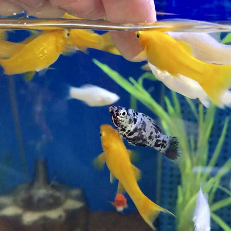 ◆新しい水槽には、たくさん魚を入れてはいけない理由とは