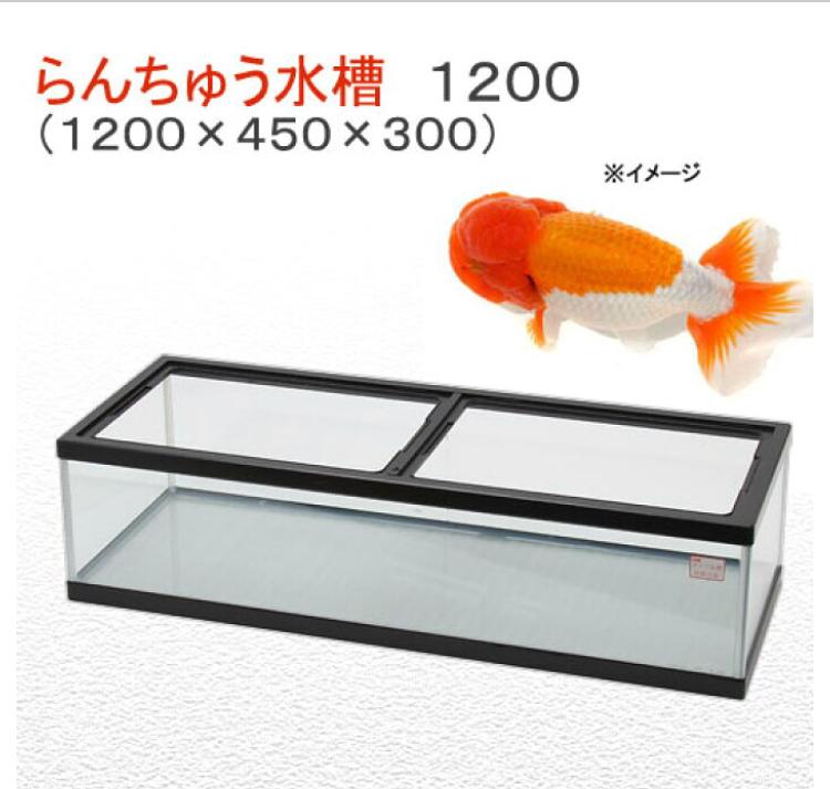 ◆金魚やメダカやを飼うのに、浅い器&水槽が良いのですか?背の低い水槽こと、通称らんちゅう水槽で飼育してみる?!