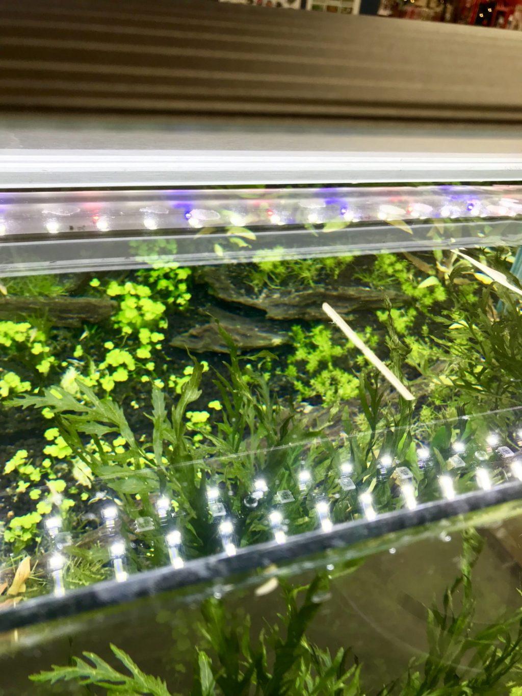 ◆熱帯魚に照明は必要ですか?ライトは無くても、魚は死なない。付ける理由と選び方とは。